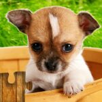 Dogs Jigsaw Puzzles Game – For Kids Adults 26.2 MOD Unlimited Money for android