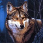 Wolf Jigsaw Puzzles MOD Unlimited Money for android