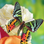 Butterflies Jigsaw Puzzles MOD Unlimited Money for android